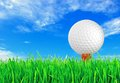 Golf ball on the green grass of the golf Royalty Free Stock Photo