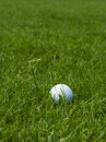 Golf ball on lawn Royalty Free Stock Photo