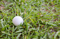 Golf ball on the lawn. Royalty Free Stock Photo