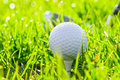 Golf ball and putter on the field Stock Photos