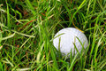 Golf ball in the rough Stock Image