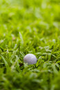 Golf ball in the rough Royalty Free Stock Photos