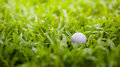 Golf ball in the rough Royalty Free Stock Photography