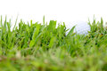 Golf ball in rough grass hard to play Stock Photography