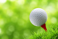 Golf ball on tee a green bury background Royalty Free Stock Photography