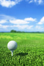 Golf ball on tee on the green grass Royalty Free Stock Photography