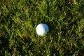 Golf ball on wet lush fairway Stock Photography
