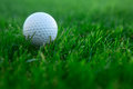 Golf ball white lying on the green grass course Royalty Free Stock Image