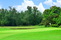 Golf course green view of Royalty Free Stock Photos
