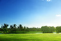Golf course palm trees and blue sky Stock Image