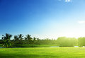 Golf course palms on thailand Stock Photo