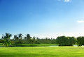 Golf course palms on thailand Stock Photos
