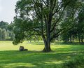 Golf courses in Sigulda, Latvia. Landscape with golf courses