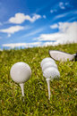 Golf theme with vivid colors summer sports colorful concept grass Royalty Free Stock Image