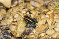 Golfo dulce poison frog over rocks Stock Photography