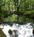 Golitha falls bodmin moor cornwall england river fowey cornish tourist attraction Stock Photography