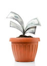 Good investment growing money in the flowerpot Stock Photos