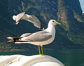 Good Looking Seagull In Nature