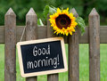 Good morning sign on fence hung garden with with sunflower green grass in background Royalty Free Stock Images