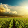 Good sunset over field Royalty Free Stock Photo