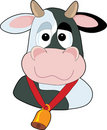 Goofy Cow Head Stock Photos