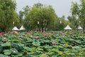 Goongnamji in buyeo during lotus flower festival Royalty Free Stock Images