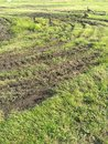 Goose tire tracks