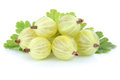 Gooseberries gooseberry berry berries fruits fruit isolated on w Royalty Free Stock Photo