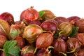 Gooseberries macro Royalty Free Stock Photo