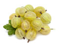 Gooseberry isolated on white background Stock Photos