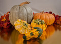 Gord collection pumpkin and gords at fall harvest time Royalty Free Stock Photos