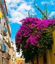 Gorgeous bouganville in bairro alto lisbon portugal Stock Photography