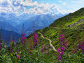 Gorgeous view in the swiss alps mountain paths and purple flowers majestic Stock Images