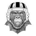 Gorilla, monkey, ape Frightful animal Wild animal wearing rugby helmet Sport illustration