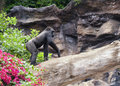Gorilla outdoors Stock Photography