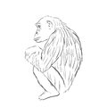 Gorilla symbol - vector illustration Royalty Free Stock Photo