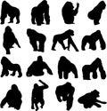 Gorillas are the largest primates