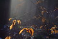 Sunlight in dark forest illuminating spider silk at leaves Royalty Free Stock Photo