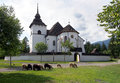 Gothic church in Pribylina with sheep