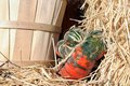 Gourd pumpkin for decoration of havest and thanksgiving time Royalty Free Stock Image