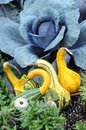 Gourd swan squash for autumn harvest decoration in the garden Royalty Free Stock Photo