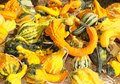 Gourds Royalty Free Stock Photo