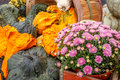 Gourds and flower a picture of a beautiful assortment of orange green accented by vibrant pink arrangement Royalty Free Stock Image