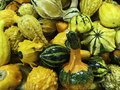 Gourds, Harvest Mixture, Hard shelled, used as ornamentation Royalty Free Stock Photo