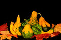 Gourds & Leaves Centerpiece Royalty Free Stock Photo