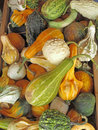 Gourds a mixed variety of Royalty Free Stock Photos