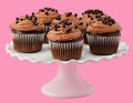 Gourmet chocolate cupcakes on pretty ruffled cakestand on a pink background Stock Photography