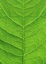 Grüner Blattabschluß oben Lizenzfreies Stockbild