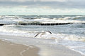 Graal muritz groynes in the surf on the german baltic coast Stock Photo
