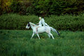 Graceful angel on the majestic horse animal Royalty Free Stock Images